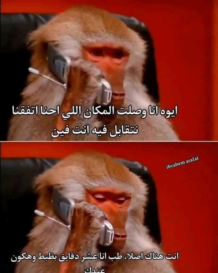 كوميك القرد
